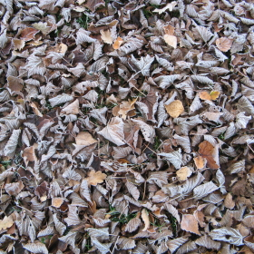 09 Feuilles mortes - Laub - leaves