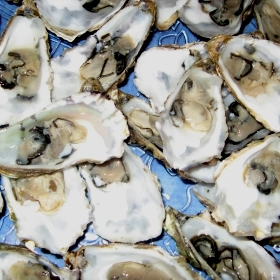 18  Huitres - Austern - Oyster