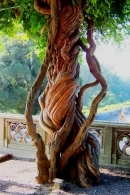 Entwined - Biltmore Estate, Asheville, North Carolina